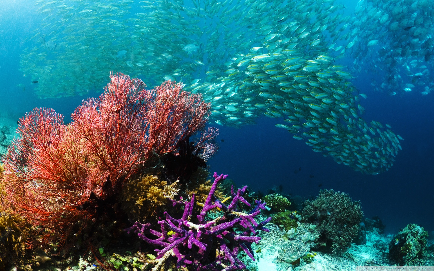 school_of_tropical_fish-wallpaper-1680×1050